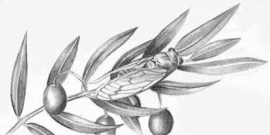 Cigarra posada sobre una ramita de olivo. Fuente: http://www.point-critique.com/2013/07/la-colline-enchantee.html?m=1